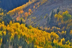 Fall Color Comes to Colorado Along Hwy 145 South of Telluride, Colorado by Ray Mathis
