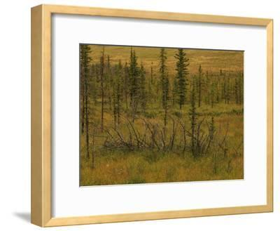 A Scenic View of a Spruce Bog
