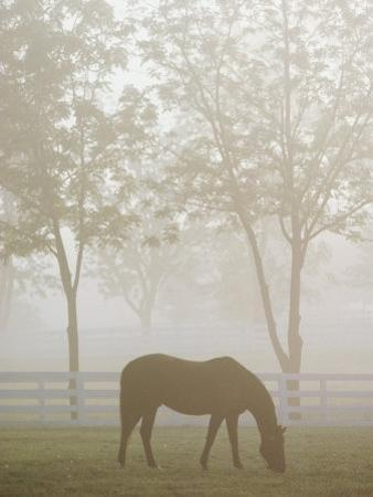 A Thoroughbred Gelding Crops the Bluegrass at the Kentucky Horse Park