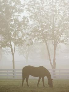 A Thoroughbred Gelding Crops the Bluegrass at the Kentucky Horse Park by Raymond Gehman