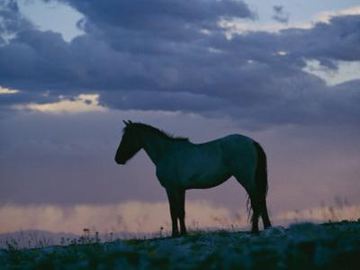A Wild Horse is Silhouetted by the Setting Sun by Raymond Gehman