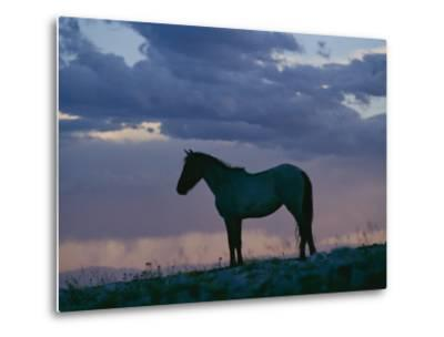 A Wild Horse is Silhouetted by the Setting Sun