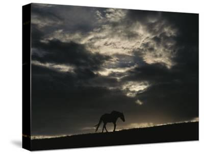 A Wild Horse is Silhouetted under Ominous Storm Clouds