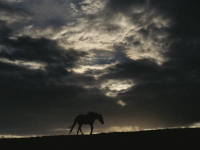 A Wild Horse is Silhouetted under Ominous Storm Clouds by Raymond Gehman