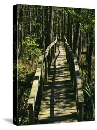 An Elevated Board Walkway Crosses a Marshy Spot in a Forest