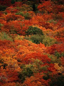 Autumn Foliage Decorates the Park by Raymond Gehman
