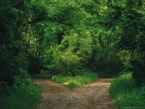 Diverging Trails in a Woodland by Raymond Gehman