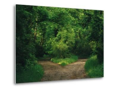 Diverging Trails in a Woodland