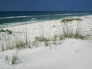 Dune Grasses Hold White Sand in Place Along a Stretch of Beach by Raymond Gehman