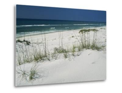 Dune Grasses Hold White Sand in Place Along a Stretch of Beach
