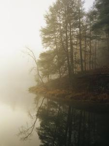 Early Morning Fog in the Trees Around Otter Lake by Raymond Gehman