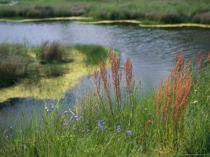 Ferns, Sedges, and Wildflowers Growing Along the Banks of a Waterway by Raymond Gehman