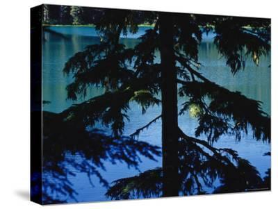 Fir Tree in Silhouette Partially Obscures a Blue Mountain Lake