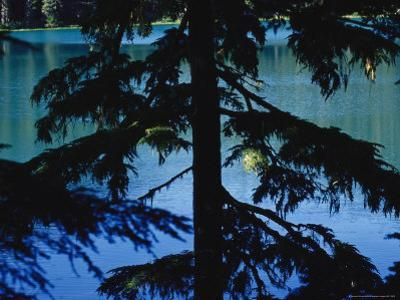 Fir Tree in Silhouette Partially Obscures a Blue Mountain Lake by Raymond Gehman