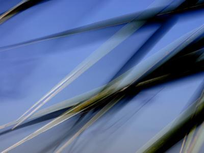 Flash Fill Palm Frond Leaves Dance in Front of the Evening Sky