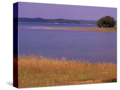 Gulls Resting on a Sandbar in Kentucky Lake