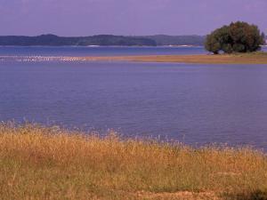 Gulls Resting on a Sandbar in Kentucky Lake by Raymond Gehman