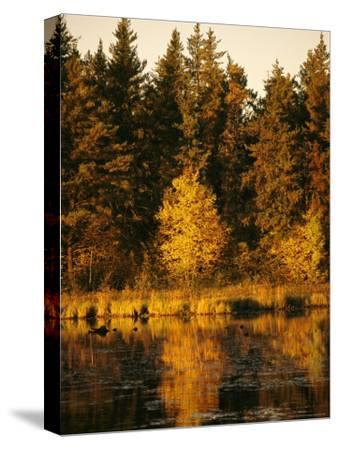 Late Afternoon View of a Lakeside Tree in Fall Foliage