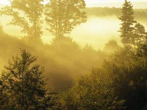 Morning Fog in a Forest Bathed in Sunlight by Raymond Gehman