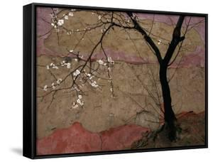 Plum Tree against a Colorful Temple Wall by Raymond Gehman