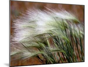 Prairie Grass by Raymond Gehman