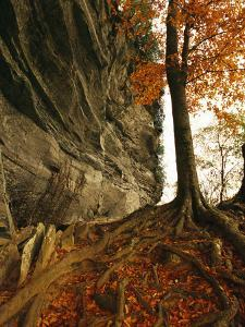 Raven Rock and Autumn Colored Beech Tree by Raymond Gehman