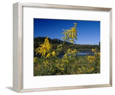 Scenic View of Goldenrod Flowers and Waterways