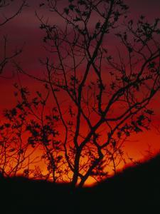 Silhouetted Tree and Blazing Sky at Sunset over Blue Ridge Mountains by Raymond Gehman