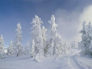 Snow-Covered Trees, West Thumb Geyser Basin, Wyoming by Raymond Gehman