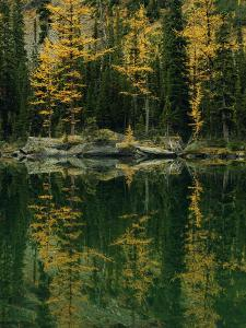 Subalpine Larches Displaying Fall Colors are Reflected in Mary Lake by Raymond Gehman