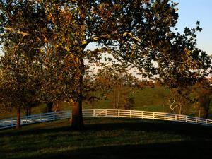 Sycamore Tree and Wood Fence at the Shaker Village at Pleasant Hill by Raymond Gehman