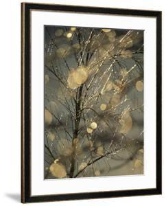 The Frozen Branches of a Small Birch Tree Sparkle in the Sunlight, Waynesboro, Pennsylvania by Raymond Gehman