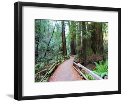 Trail and Redwoods in Muir Woods National Monument, California