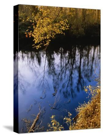 Trees Cast Reflections on the Dismal Swamp Canal