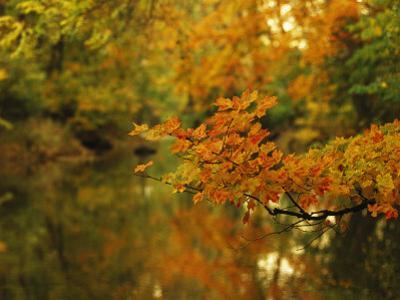 Trees in Fall Colors Reflected in Big Cove Creek by Raymond Gehman