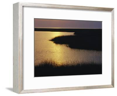 Twilight on a Marsh with Aquatic Grasses