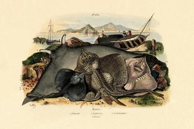 Rays, 1833-39--Giclee Print