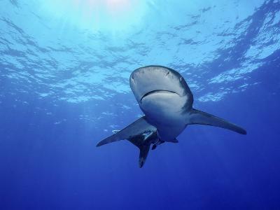 Rays of Light Shining Above an Oceanic Whitetip Shark-Stocktrek Images-Photographic Print