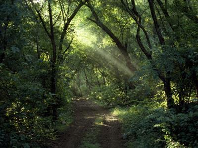 Rays of Sunlight Pass Through a Forest Canopy over a Trail-Jason Edwards-Photographic Print