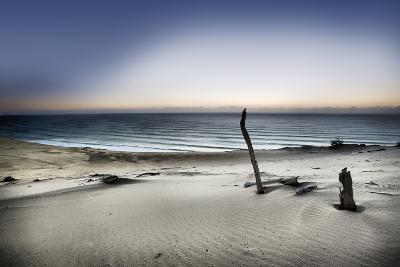 Reach for the Sun-Mel Brackstone-Photographic Print