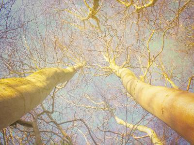 Reaching For The Sky-Hal Halli-Art Print