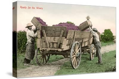 Ready for the Winery, Grape Harvest