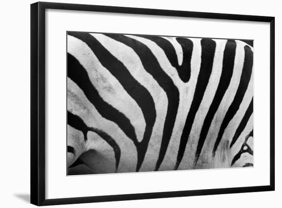 Real Zebra Pattern Close-Up. Black and White Stripes Background-Michal Bednarek-Framed Photographic Print