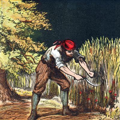 Reaper Beginning to Cut Crop of Wheat with a Sickle, 1867--Giclee Print