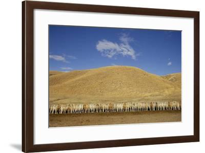 Rear View of a Herd of Cattle Feeding Beneath Hills-Michael Forsberg-Framed Photographic Print