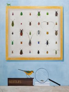 Beetle Mania, 2012-13 by Rebecca Campbell