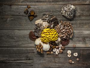 An assortment of popular mushrooms. by Rebecca Hale