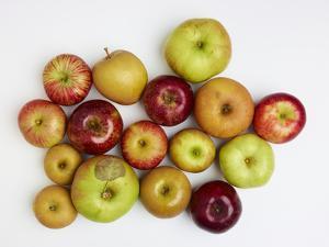Heirloom Varieties of Apples by Rebecca Hale