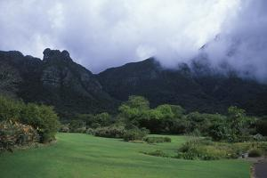 Kirstenbosch National Botanical Gardens in Cape Town, South Africa by Rebecca Hale