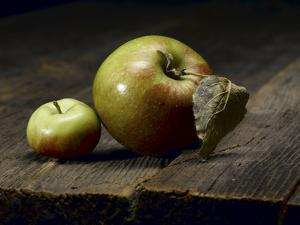 Two Heirloom Apples Shot on Old Barn Wood by Rebecca Hale
